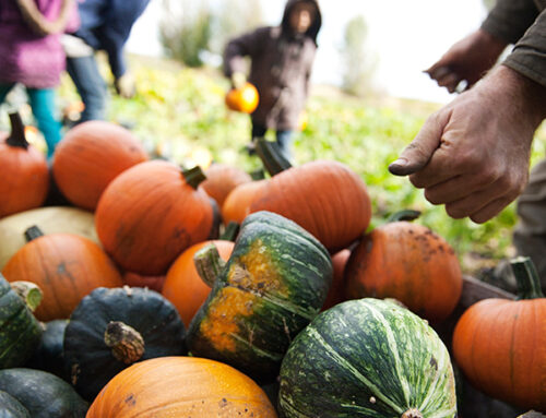 How to Store Garden Vegetables Over Winter